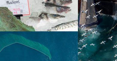 'Bluewashing' Seafood Won't Make the World More Green